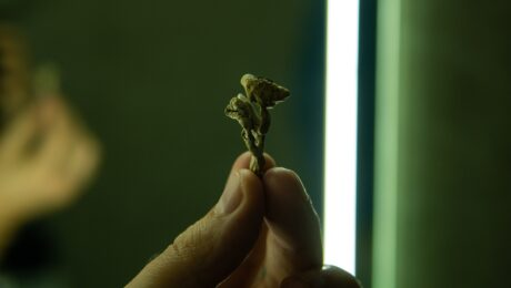 cogumelos magicos - Psilocibina