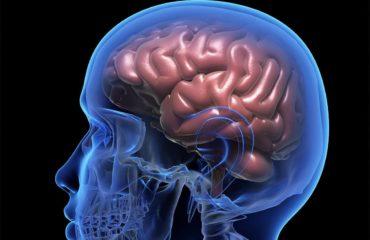 como os cogumelos mágicos agem no cerebro