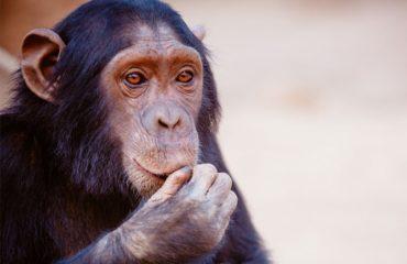 teoria dos macacos apedrejados